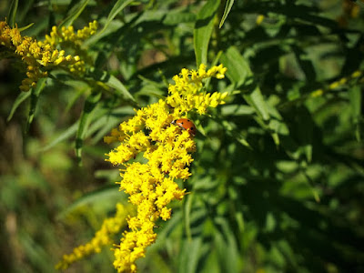 Closeup Pic of Ladybug with Canon G10