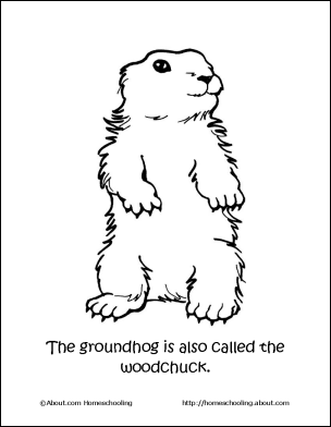 7 Groundhog Coloring Pages Collection