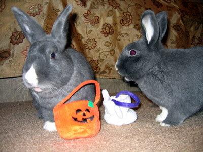 Bunny Halloween