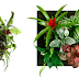 Small Garden, cultivez votre intérieur