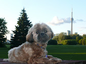 Toronto's Canadian National (CN) Tower (Background) and My Guard Dog (Wally)