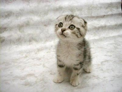 Petit-chat-mignon.jpg