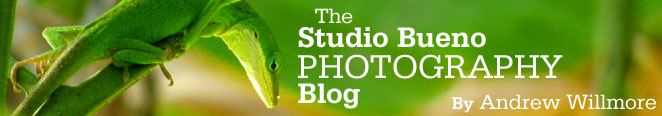 The Studio Bueno Photography Blog