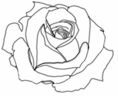 Rose Flower drawing