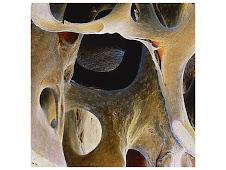 Sceleton 1