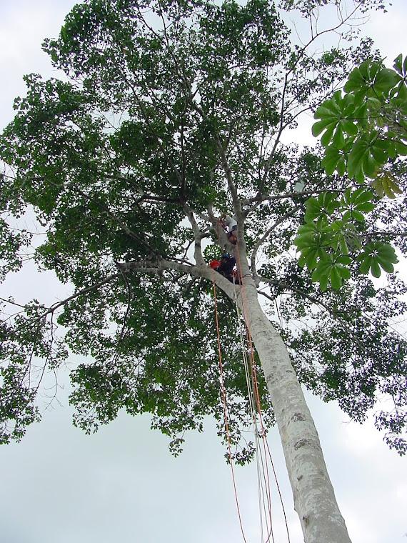 Treinamento no Instituto Nacional de Pesquisas da Amazônia, Manaus - AM