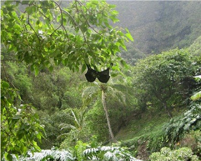 Olga the Traveling Bra - hanging around in the Ioa Valley, Maui
