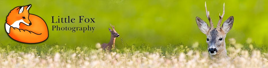 Nature and Wildlife Photography blog | Wildlife photography | Landscape photography
