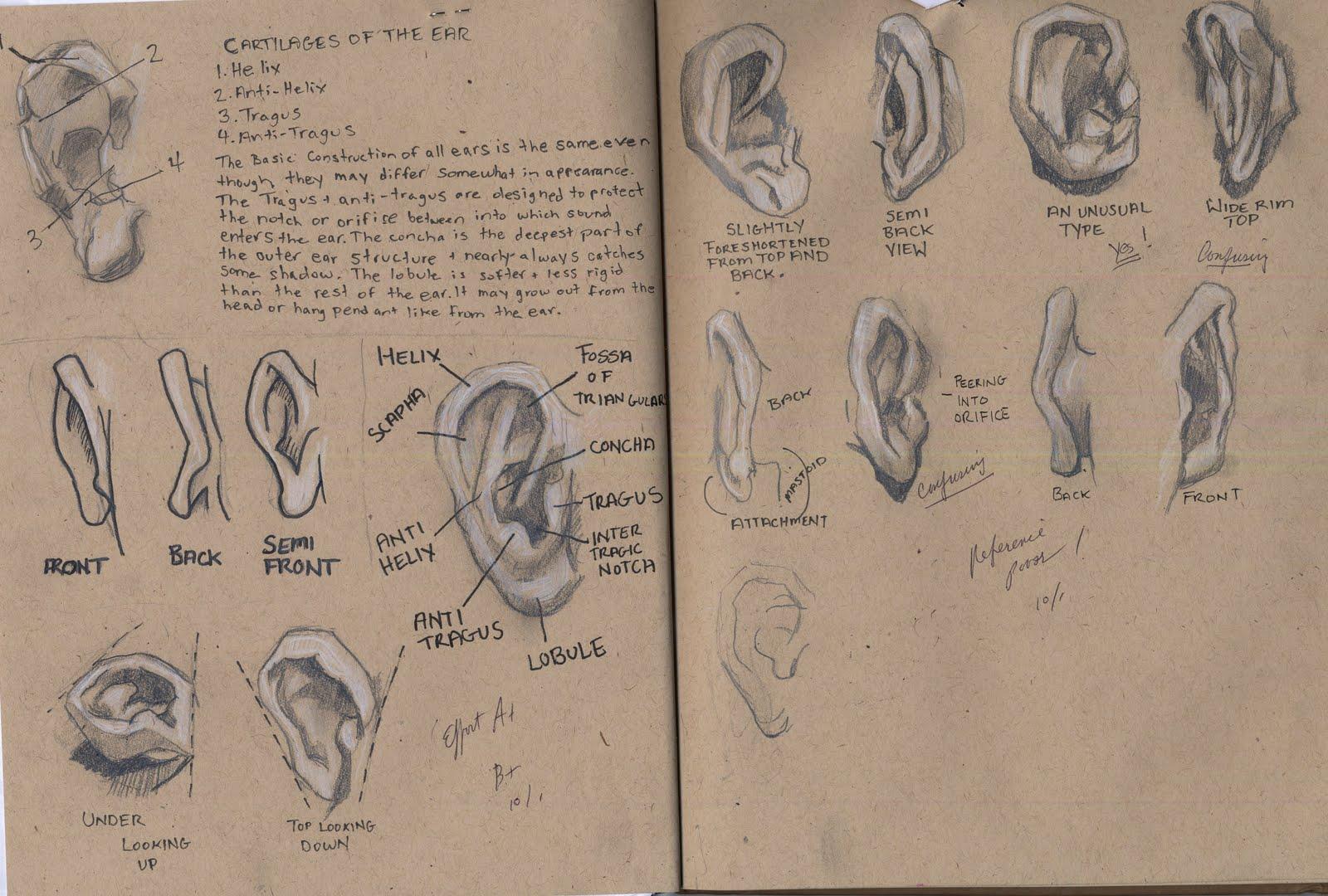 [ears]