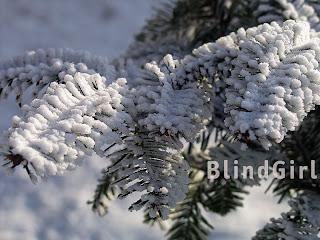 iarna crengi brad