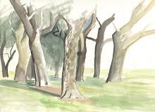 Paisaje, Árboles,  25 x 35