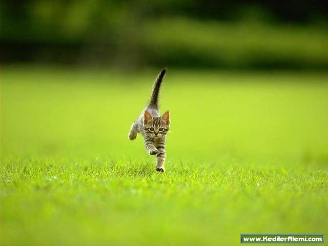 Günler geçiverdi minik kedi koşmaya başladı günler onu