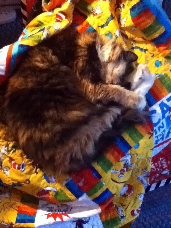 Pacific Fabrics Blog More Suess Piration A Cat In The