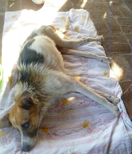 gloria - adopciones: mala praxis en las veterinarias !! denuncia