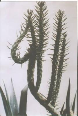 MIRACLES OF ALLAH Pics--miracles%2Bof%2BAllah-cactustree