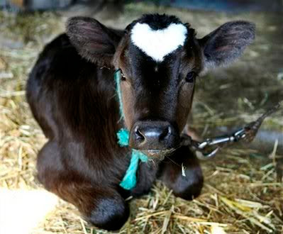 heart shape on animals body picture