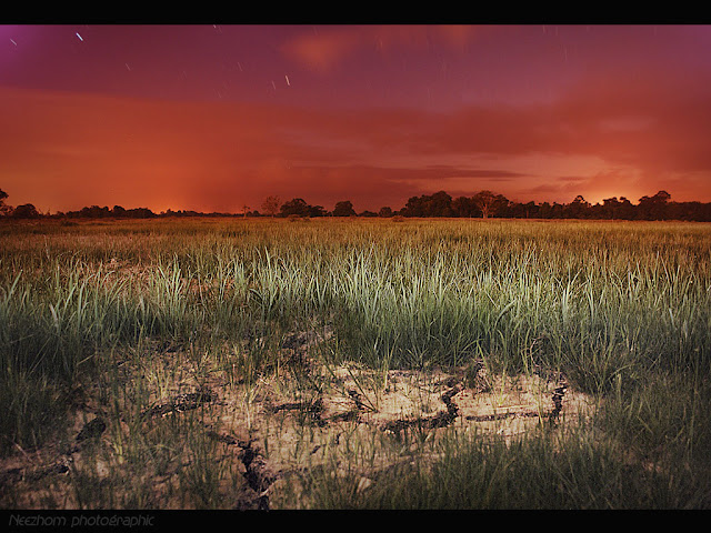 Dry rice field at dusk picture