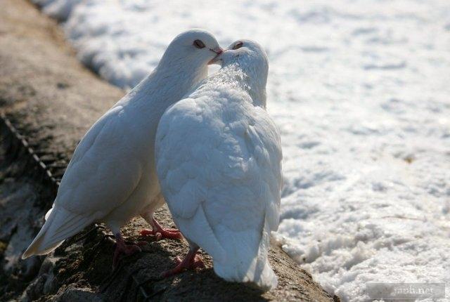 25 Amazing romantic animals in love ~ Perpustakaan