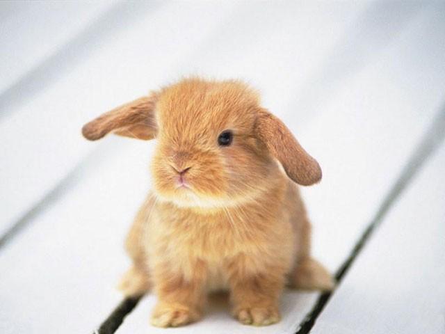 20 Really cute animals portrait ~ Perpustakaan