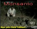 MONSANTO PLAGA GLOBALIZADA