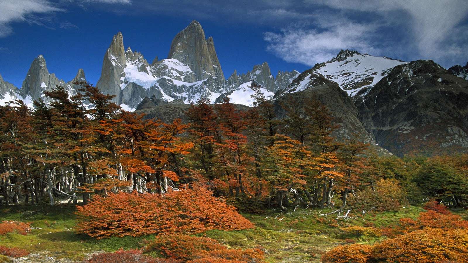 Argentina - Page 2 Mount%2520Fitzroy%2520and%2520Beech%2520Trees%2C%2520Los%2520Glaciares%2520National%2520Park%2C%2520Patagonia%2C%2520Argentina