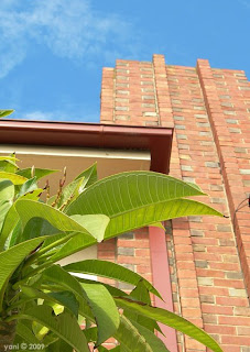 what's the connection between art deco buildings and frangipani plants?