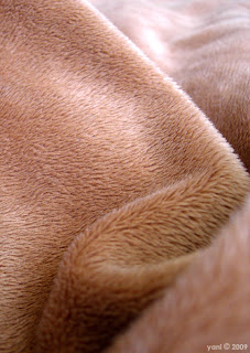 furry brown blanket