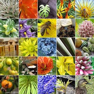 botanique 2010