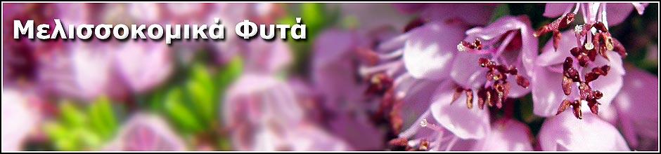 Μελισσοκομικα Φυτα