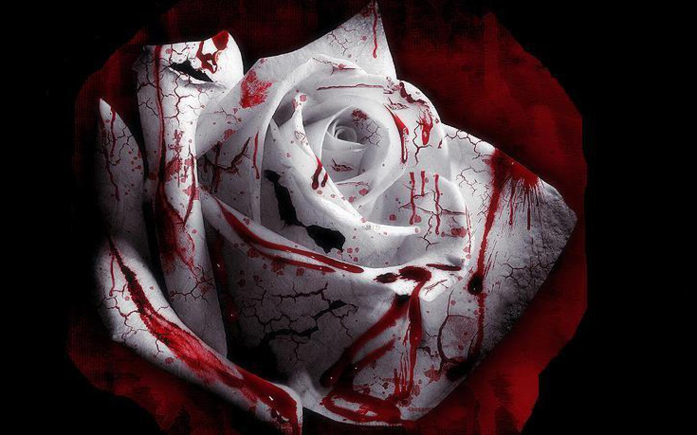 http://3.bp.blogspot.com/_3I0_GEQtQOQ/S__HQ4byvJI/AAAAAAAAAFg/Owi4PS-H1zE/s1600/Blood_Roses_.jpg