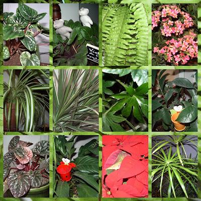 Design Plantes vertes et pollution