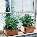 Organic Windowsill Herb Garden