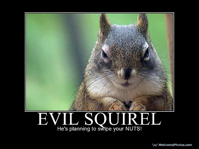 Evil Squirel Demotivational Poster