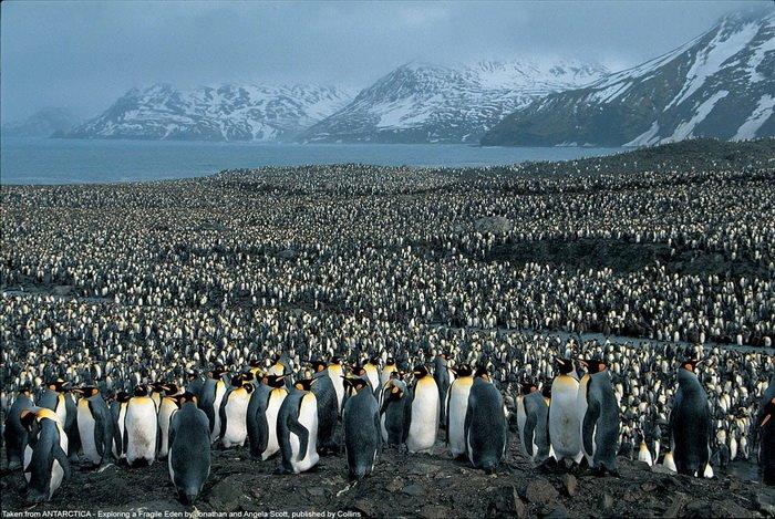 [penguin]