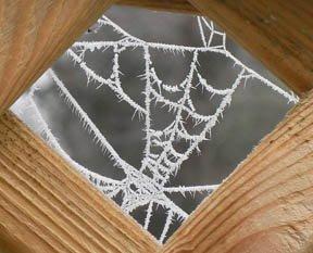 [wood.web.2]