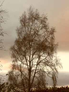 [tree.web]