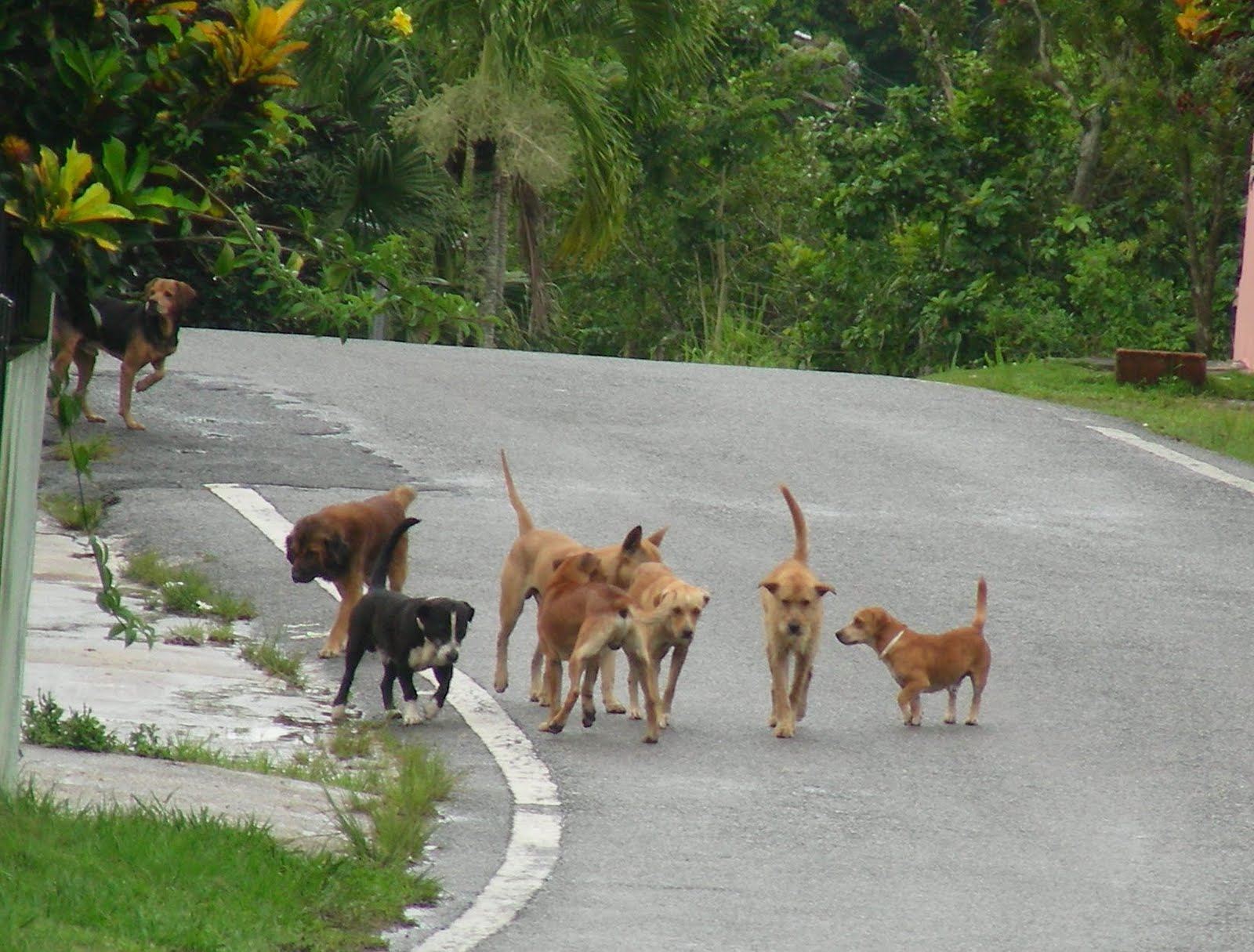 Let's talk dog: A Pack of Street Dogs