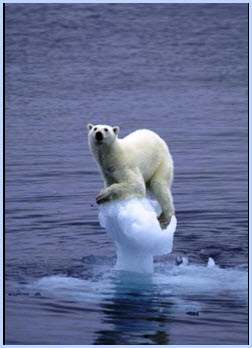 polar bear trapped on knob of floating ice