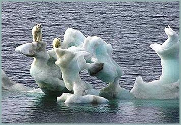 polar bears on ice floe