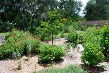 Delightful My Family And I Joined Miami Blue Chapter NABA, And Shortly Afterward I Was  Invited To Go On A Butterfly Gardens Tour Of Four Private Yards Offered By  Miami ...