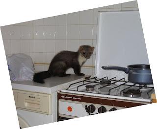 une fouine habite chez moi va t il passer la casserole. Black Bedroom Furniture Sets. Home Design Ideas