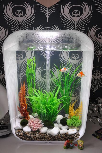 Decorative Biorb Fish Tank by Simon Harrison & 2010   Our Pets We Love u0027Em