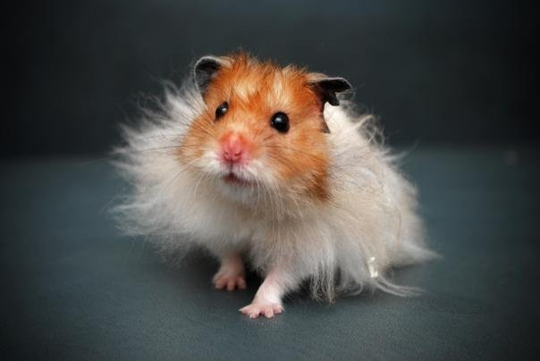 Speaking of which, I have like a thing for teddy bear hamster names, I ...
