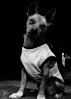 quien dijo que el mejor amigo del Hombre no podia ser un perrito Arequipeño xD ... :)