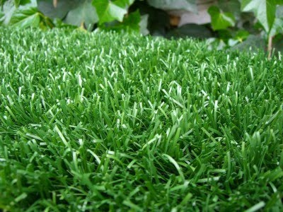 Blog de nono - Cuando plantar cesped ...