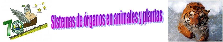 Sistemas de órganos en animales y plantas