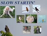 SLOW STARTIN'