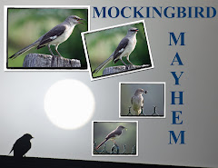 MOCKINGBIRD MAYHEM