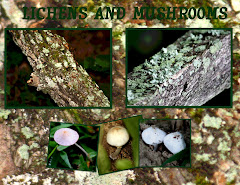 LICHENS AND MUSHROOMS