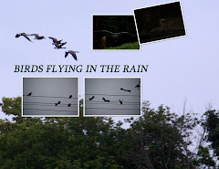 BIRDS FLYING IN THE RAIN